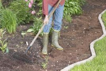 Keep the garden raked free of plant debris to avoid spreading infections.