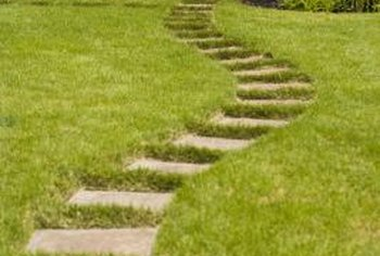 Low-growing plants are ideal between garden path stones.