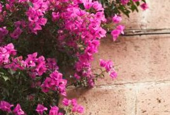 Flowers add country charisma to washed-out brick.