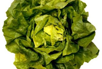 Butter lettuce is ready for harvest in 60 to 70 days.