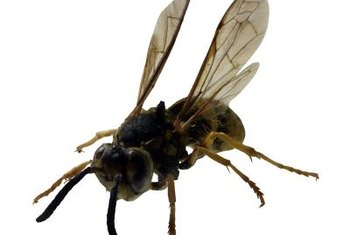 Small wasps have a painful sting.