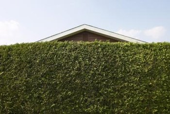 A tall hedge is only one way to protect your privacy.
