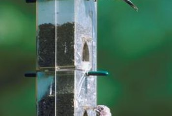 Different birds visit different types of bird feeders.