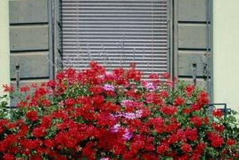 Flowers cascading from a window box add cheer to a home exterior.