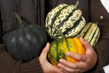 Acorn squash have characteristic ridges and come in many colors.
