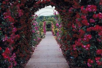 Arbors along paths enhance the garden experience.