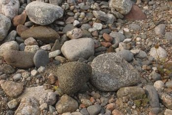 Pebbles add interest and color to the landscape.
