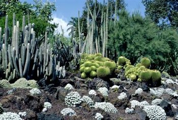 Vary cacti shapes and sizes to create visual interest.