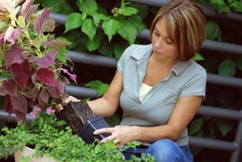 Don't leave the roots exposed for too long when you're transplanting.