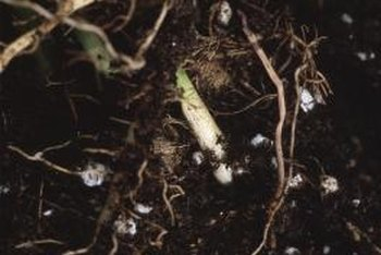 Testing the nutrient content of your soil helps determine the best fertilizer for your vegetables.