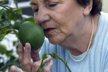 Pollinate your lime trees for a better fruit harvest.