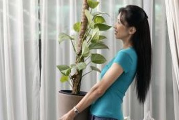 Houseplant leaves collect dust and grime over time, leaving their surfaces less than attractive.