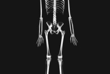 Vitamin D and zinc both contribute to a strong skeleton.