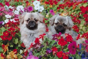 Barriers and training keep dogs out of flower beds.