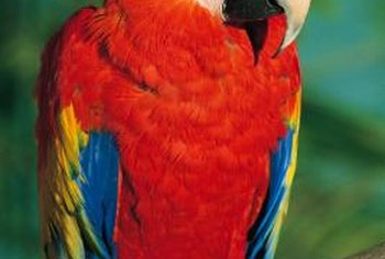 Macaws and many other colorful creatures live in tropical rain forests.