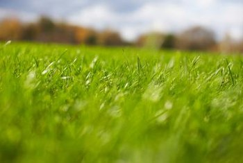Mowing grass when it is wet can spread a fungus.