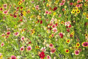 Wildflowers flourish in their native soils.