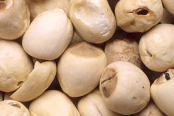 Chickpeas are ideal for gardens in warm, arid climates.