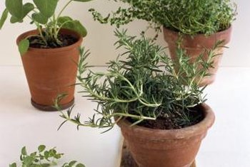 Use soilless potting mixes to grow herbs in containers outdoors.