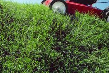 A dull lawnmower blade rips grass instead of cutting it.