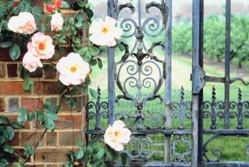 Climbing roses on a wrought iron fence creates a classic romantic look.