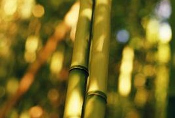 Bamboo grows tall and easily screens out the afternoon sun.