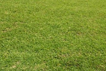 Caring for a lawn may involve seeding it in autumn.