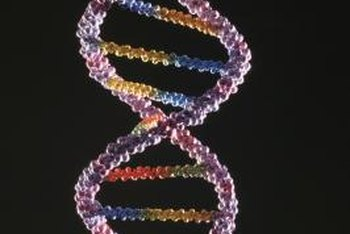 Without DNA and other necessary acids, humans would become extinct.