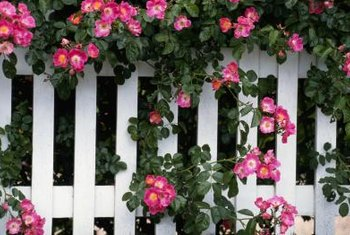A white picket fence provides a sturdy backdrop for flowering plants.
