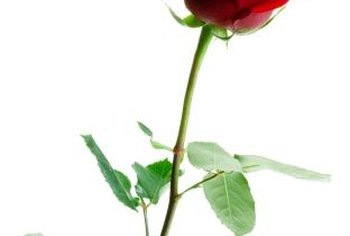 Collect roses for air drying when buds are half open, if possible.