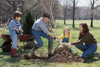 Plant mulberry trees in the spring or fall.