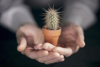 A small cactus makes a low-maintenance houseplant.