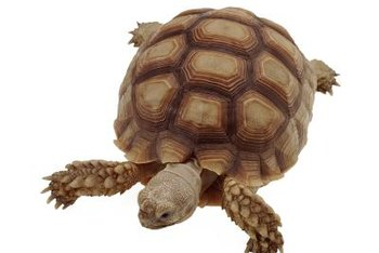 The tortoise shell's distinctive patterns inspired the traditional bagua.