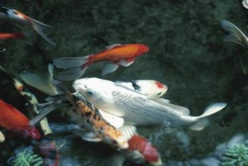 A sand filtration system keeps the water in a koi pond clear.