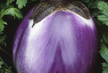Eggplants can suffer from problems with insects, slugs, disease and environmental disorders.