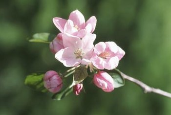 Following a regular spraying schedule helps control orchard pests.
