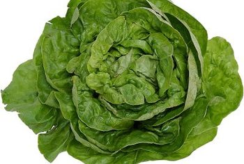 Lettuce varieties include crisphead, stem, cos, butterhead and leaf types.