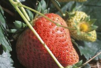 Some strawberry varieties have attractive pink flowers.