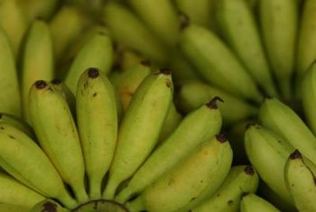"Small bananas, such as ""Lady Fingers,"" are often marketed as snack-sized fruit, due to their miniature length."
