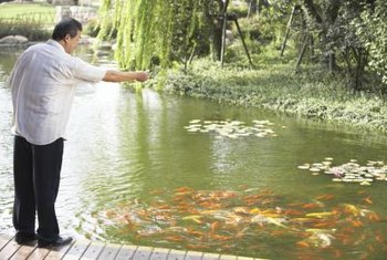 Fish improve the look of the pond and help control aquatic weeds.