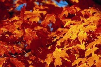 Grinding up fallen leaves makes a nutritious mulch for your garden.