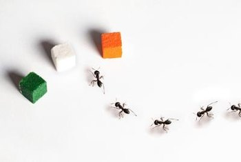 Ants are attracted to sweet things, so honey may also work in the solution.