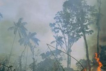 Burning rain forests is an example of an ecological footprint.