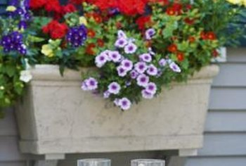 Flowering annuals are an easy way to brighten up a window box in spring and summer.