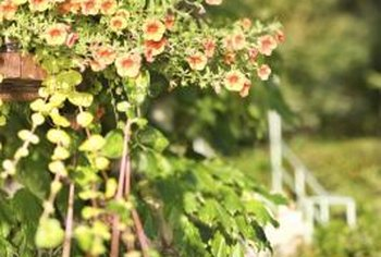 Use vines to turn a hanging basket into a cascading display of nature.