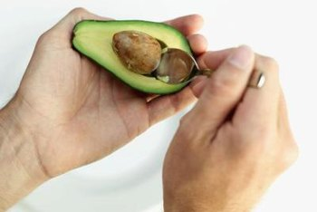Carefully pry the avocado seed from the fruit for propagation.