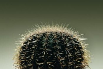 Cactus spines can pierce through fabric, so work carefully when planting.