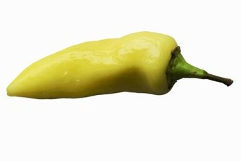 Hungarian hot wax peppers grow best in hot areas.