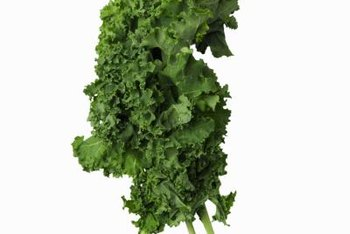 Harvest the entire kale leaf, including the stem.