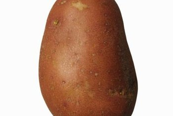 Potato scab causes blemishes on the tuber's otherwise smooth skin